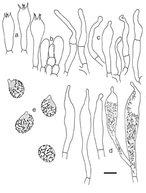 The Russulas Described By Charles Horton Peck