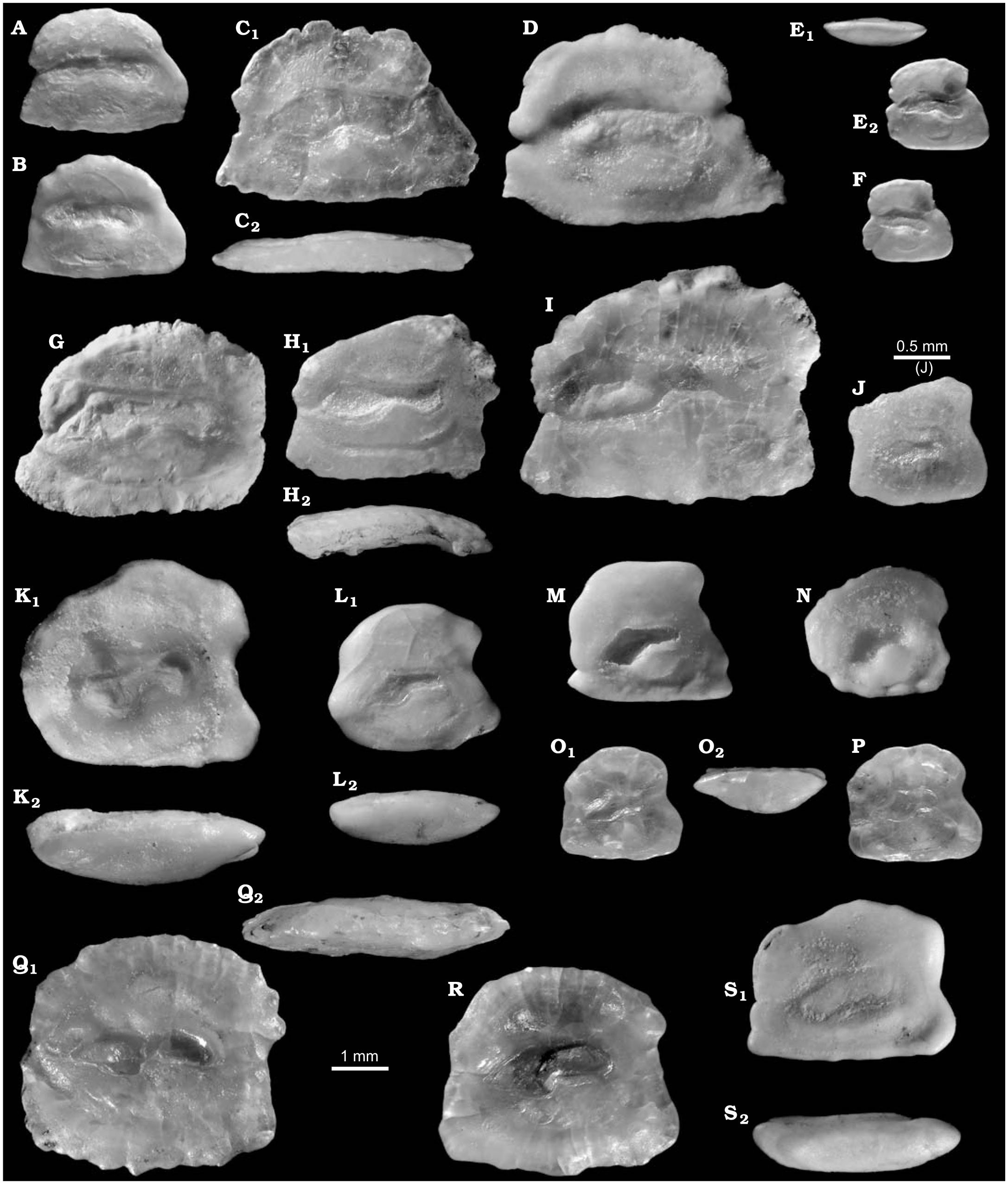 Fish Remains, Mostly Otoliths, from the Non-Marine Early