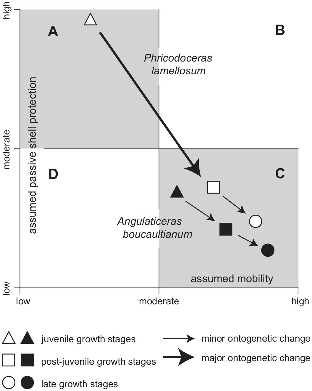 Significance of Intermediate Forms in Phyletic Reconstruction of
