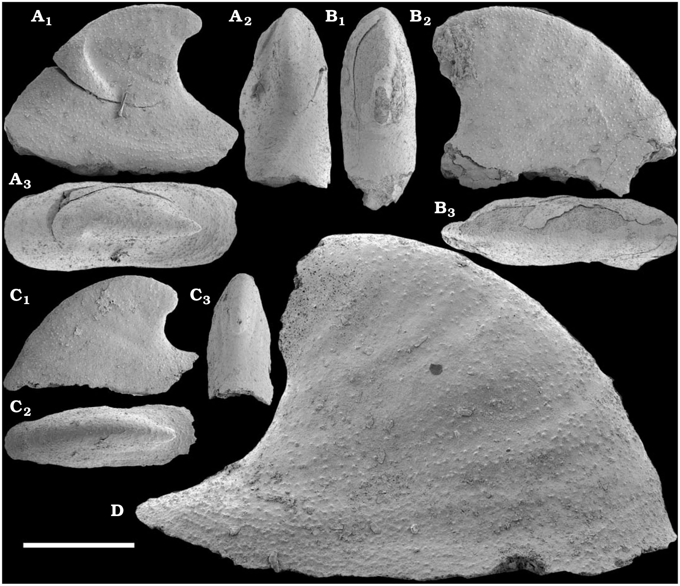 An Early Cambrian Fauna of Skeletal Fossils from the Emyaksin