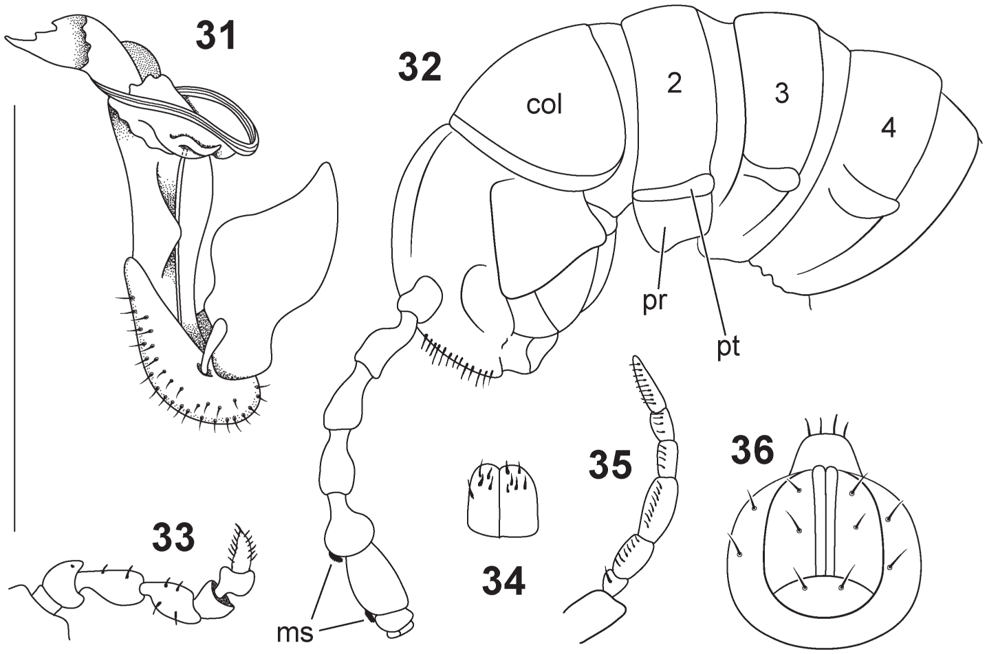 A Review of the Millipedes (Diplopoda) of Namibia, with