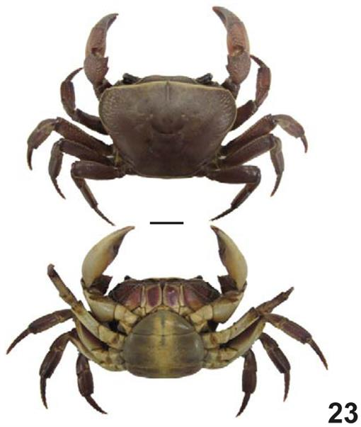 Temporal Variations in the Diversity of True Crabs