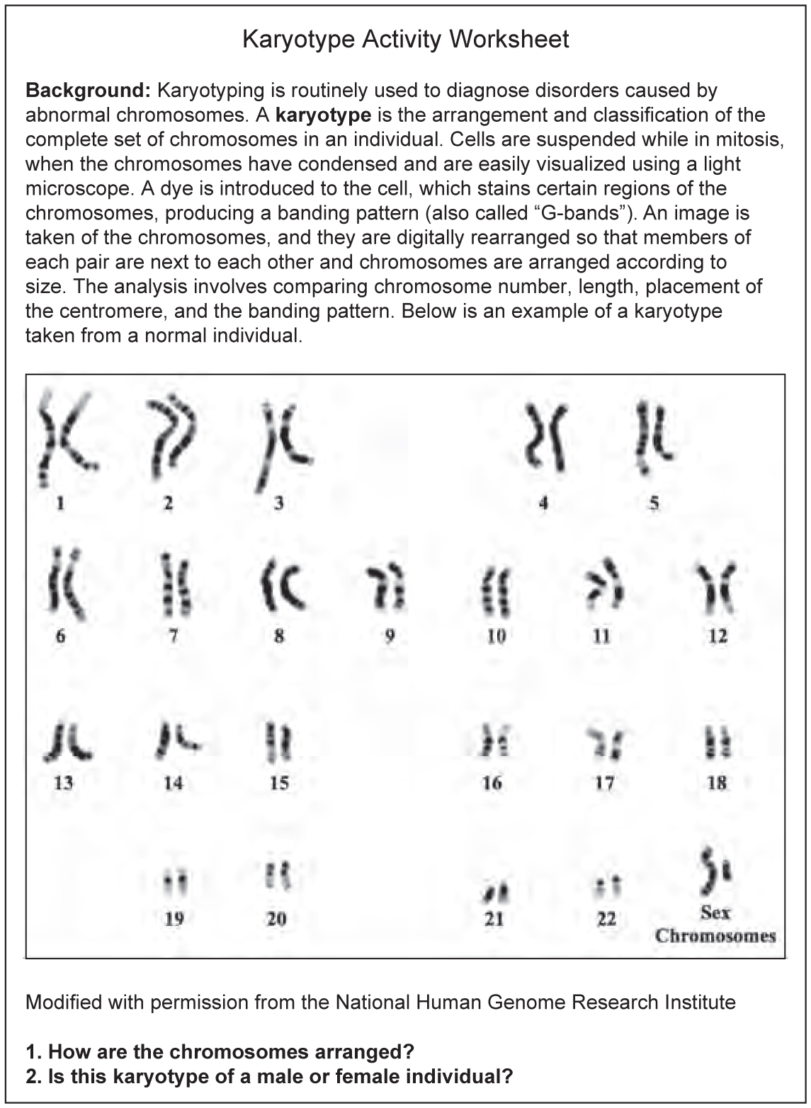 Dna Base Pairing Worksheet Answers And Insights - Page 2 ...