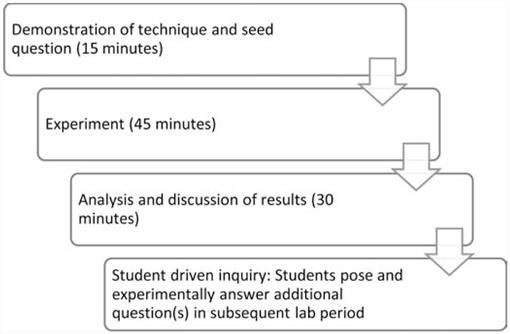 A Question-Based Approach to Teaching Photosynthesis