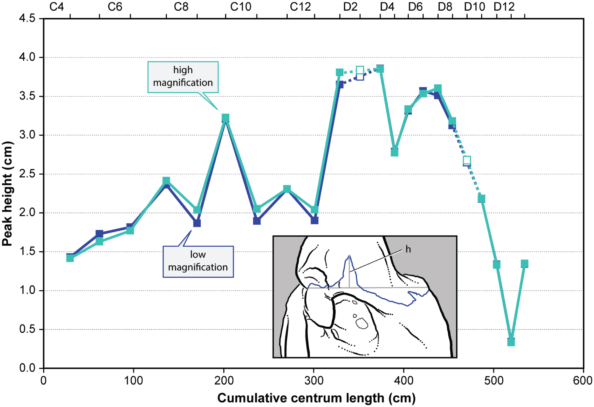 Neurocentral Suture Complexity and Stress Distribution in the