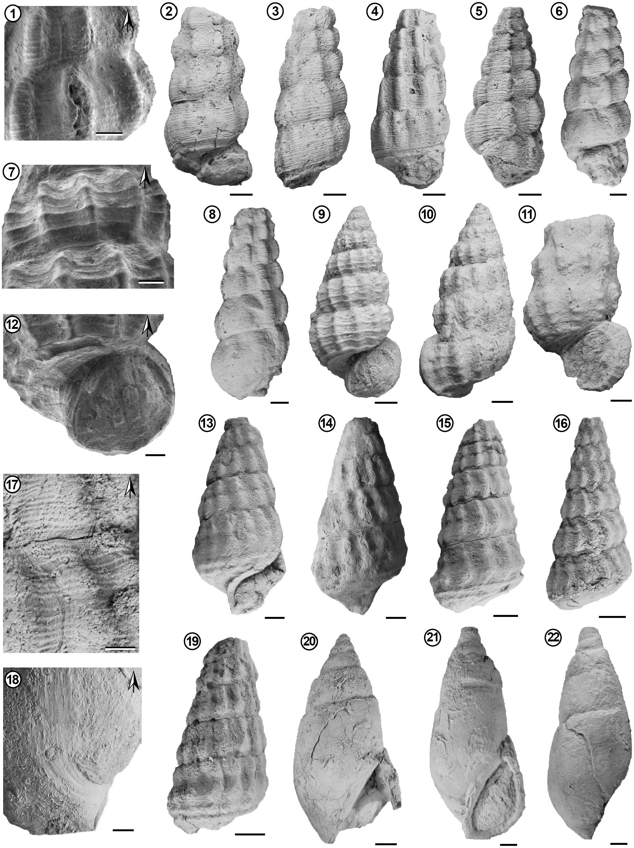 New Records of Marine Gastropods from the Lower Cretaceous