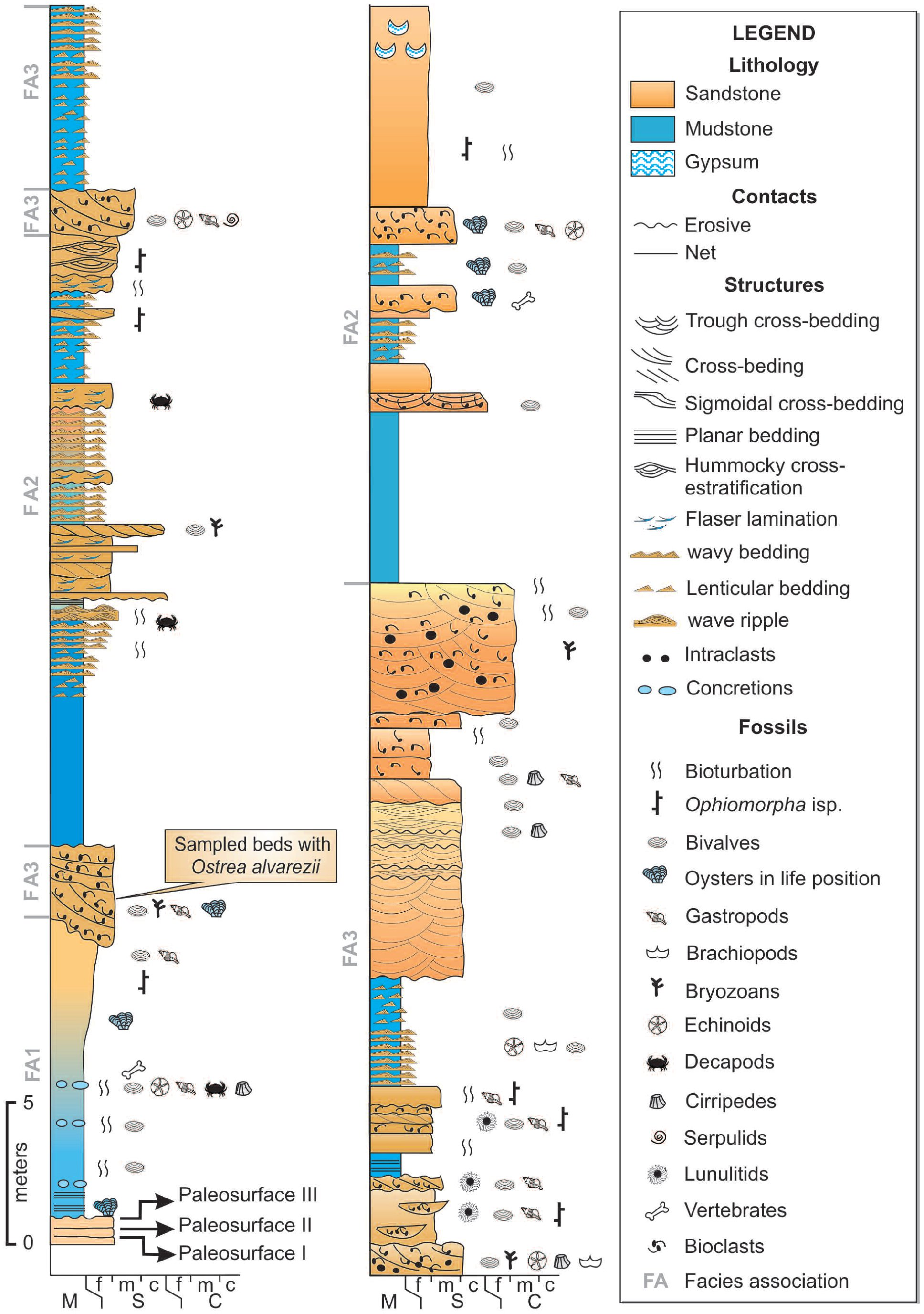 4d59f4e2b35a0 Sclerobionts on Patagonian Oysters from the Puerto Madryn Formation ...