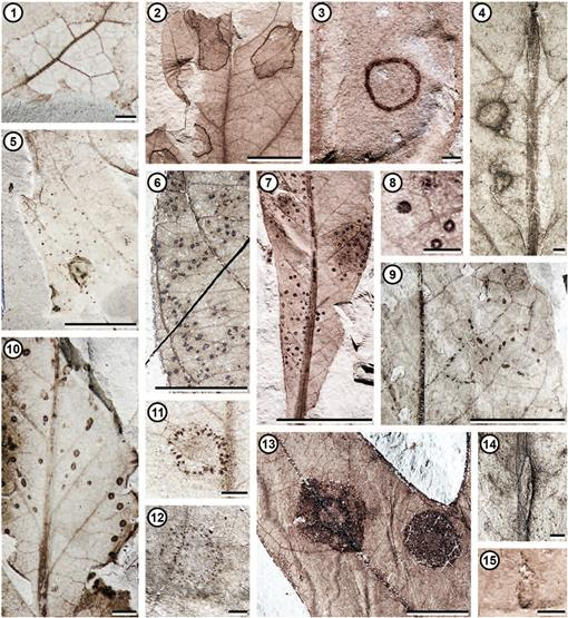 Diverse Plant-Insect Associations from the Latest Cretaceous