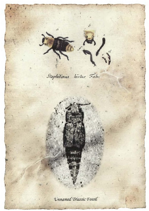Catalog of the Staphylinidae (Insecta: Coleoptera)  1758 to