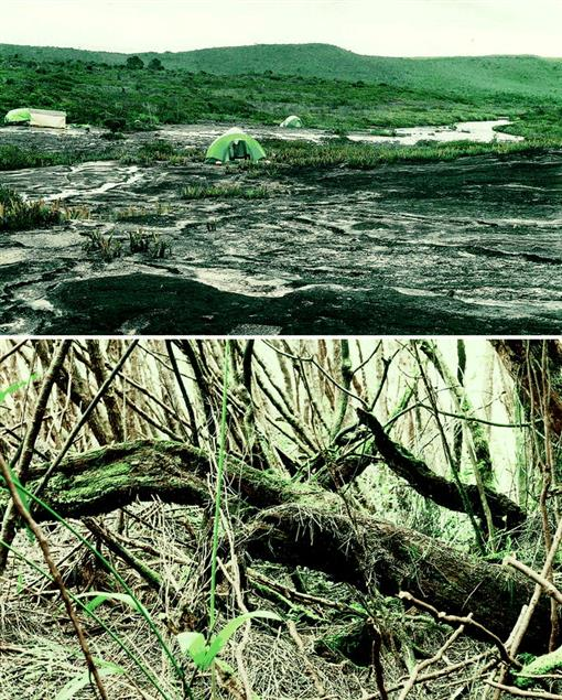 The Summit Herpetofauna Of Auyantepui, Venezuela: Report