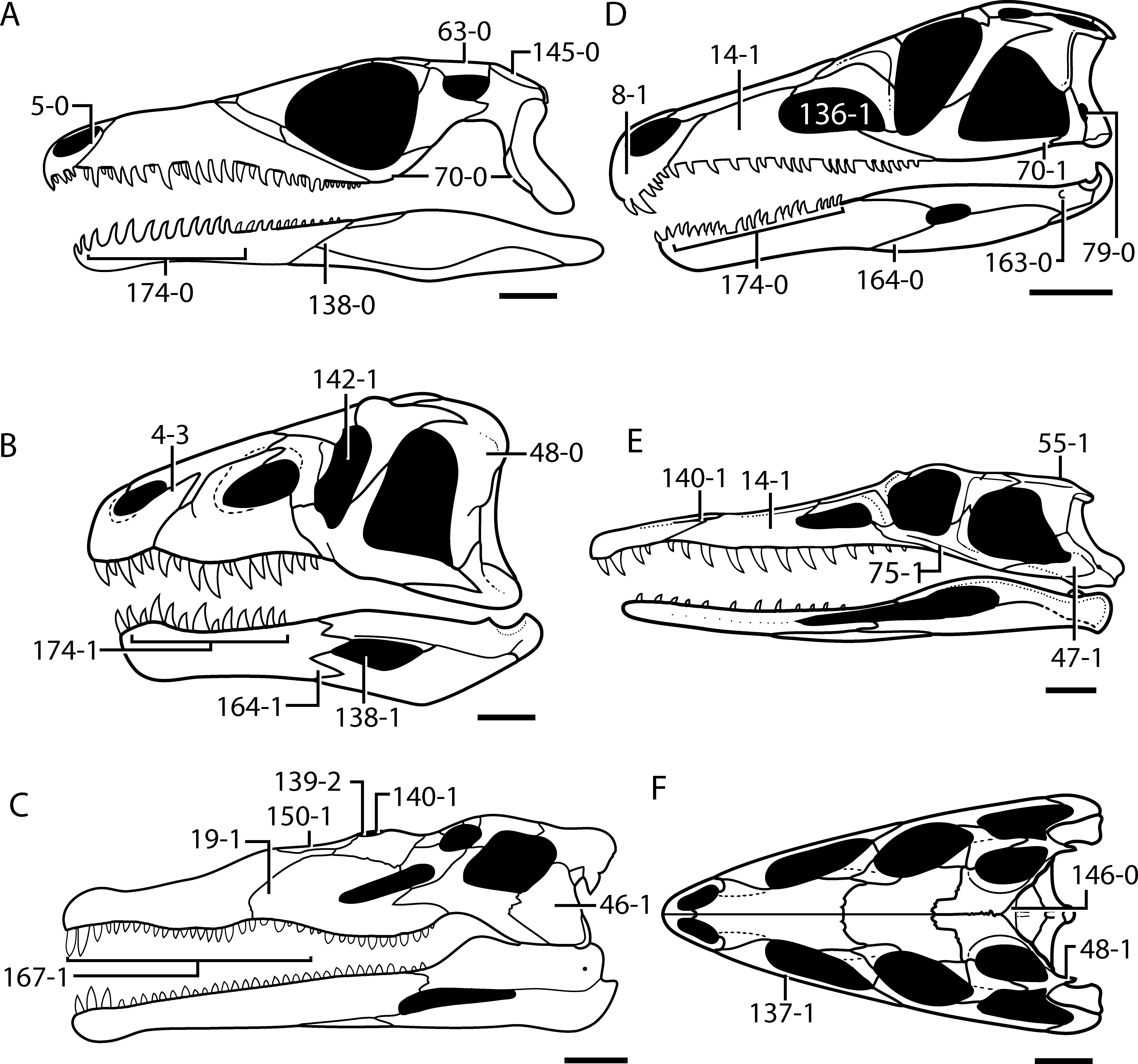 The Early Evolution of Archosaurs: Relationships and the