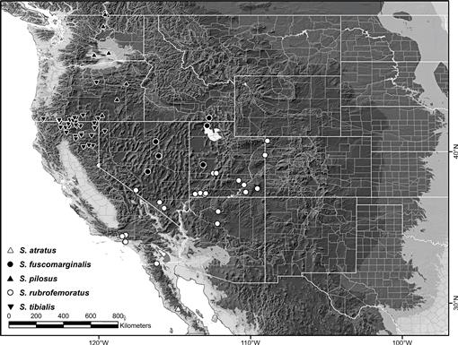 Revision and Phylogenetic Analysis of the North American