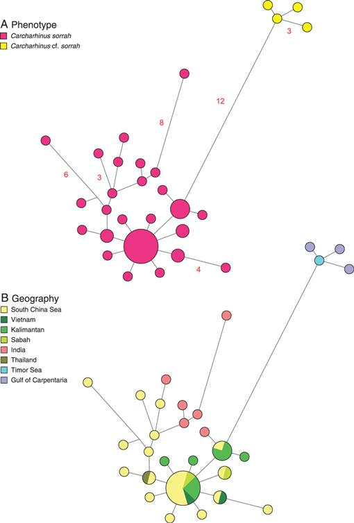 A DNA Sequence–Based Approach To the Identification of Shark