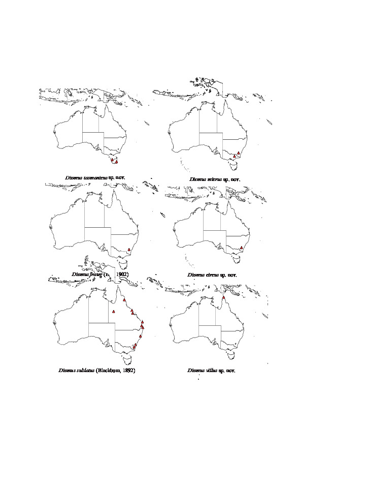 Revision Of The Australian Coccinellidae Coleoptera Genus Diomus