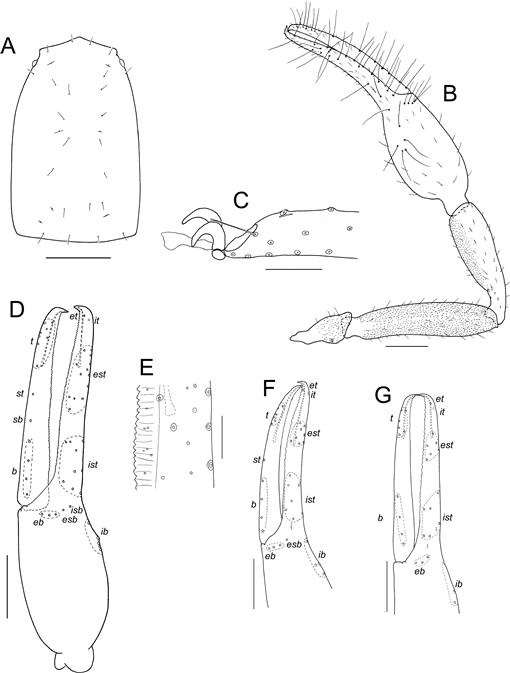 The Systematics Of The Pseudoscorpion Family Ideoroncidae