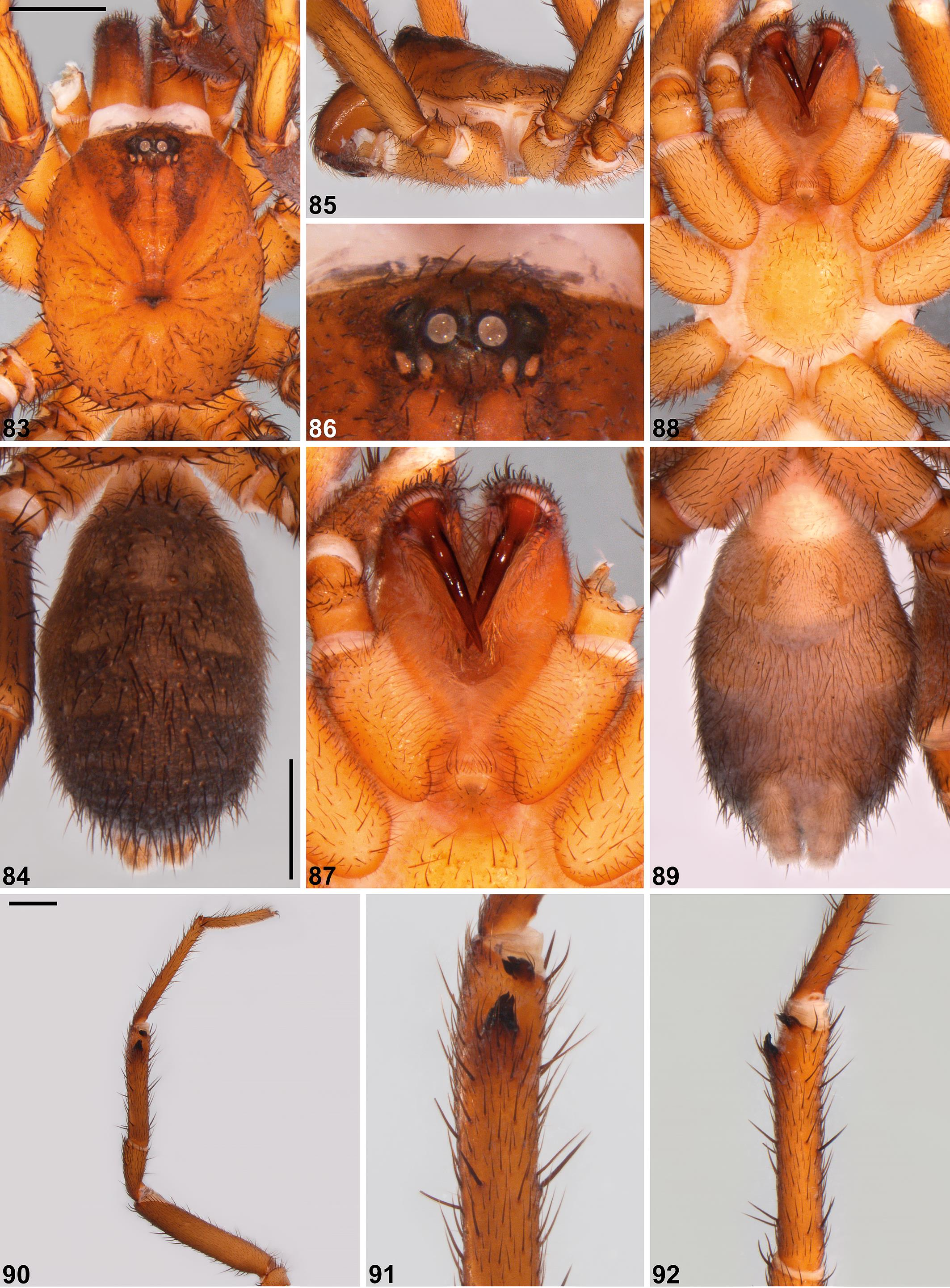 Systematics of the spiny trapdoor spiders of the genus Cataxia