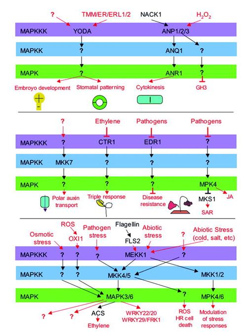 The Protein Phosphatases and Protein Kinases of Arabidopsis