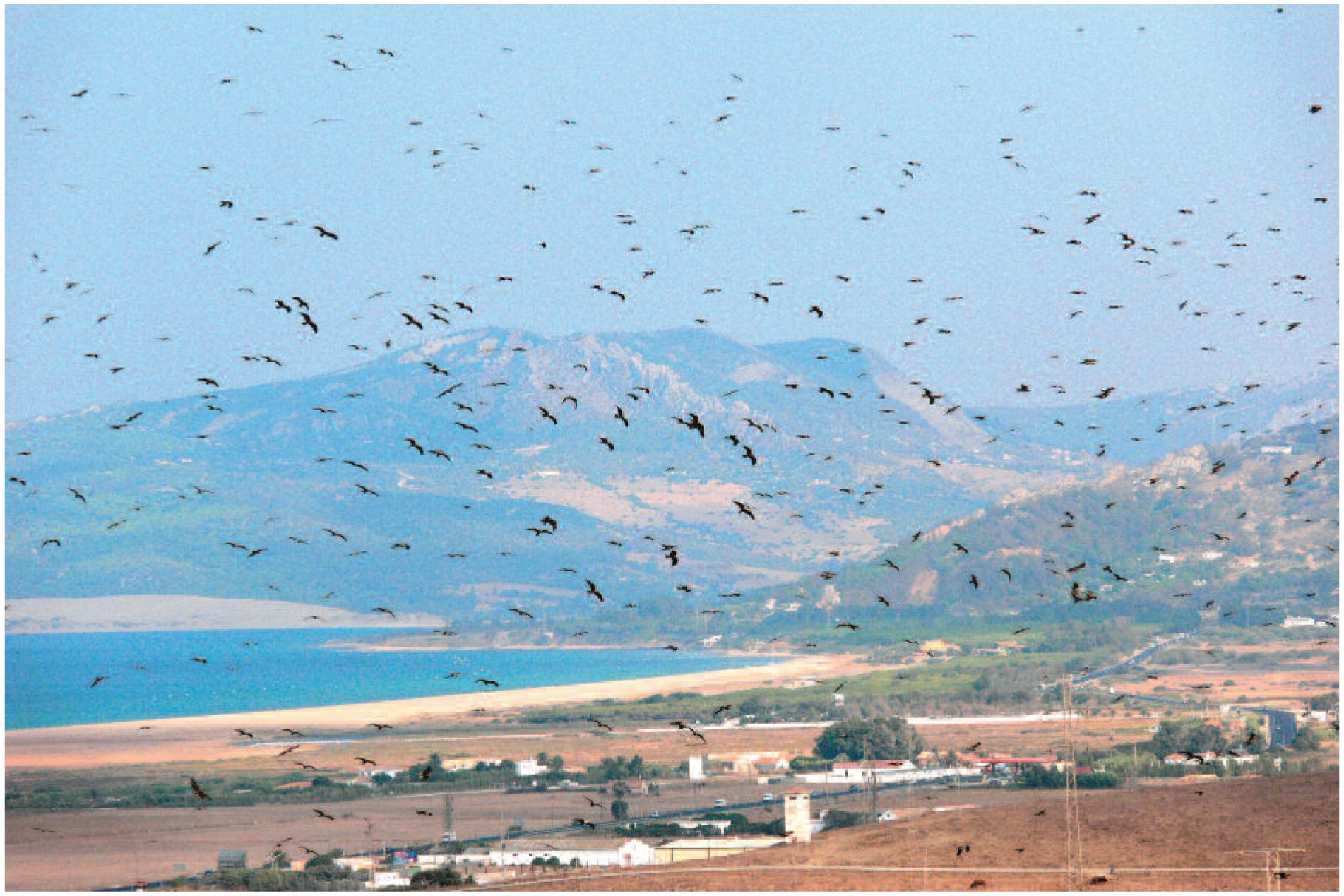 Variable Shifts in the Autumn Migration Phenology of Soaring