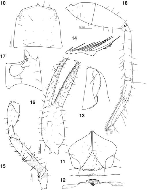 New Records Of Epigean Neobisium Species Pseudoscorpiones
