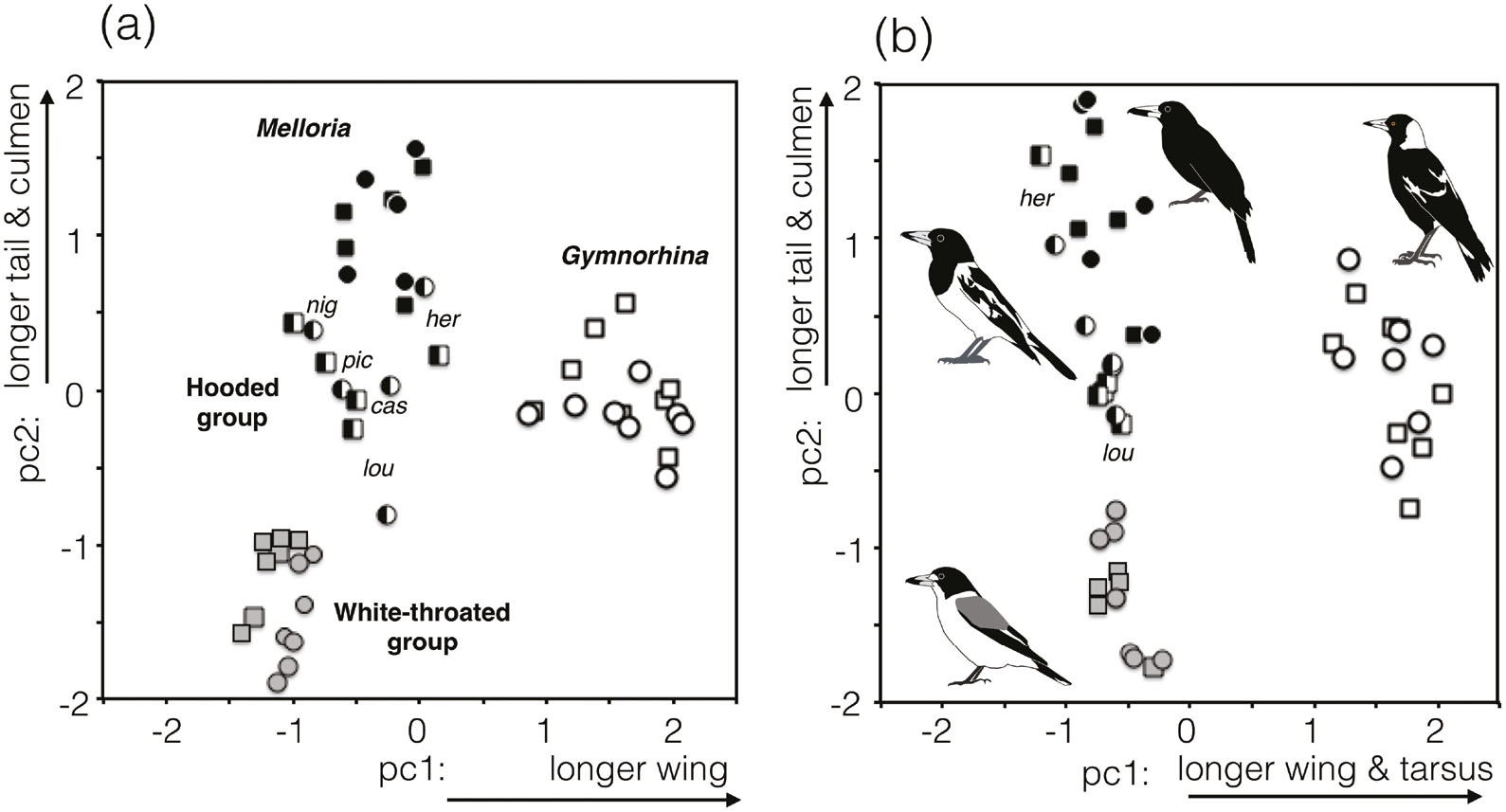 The generic taxonomy of the Australian Magpie and Australo-Papuan