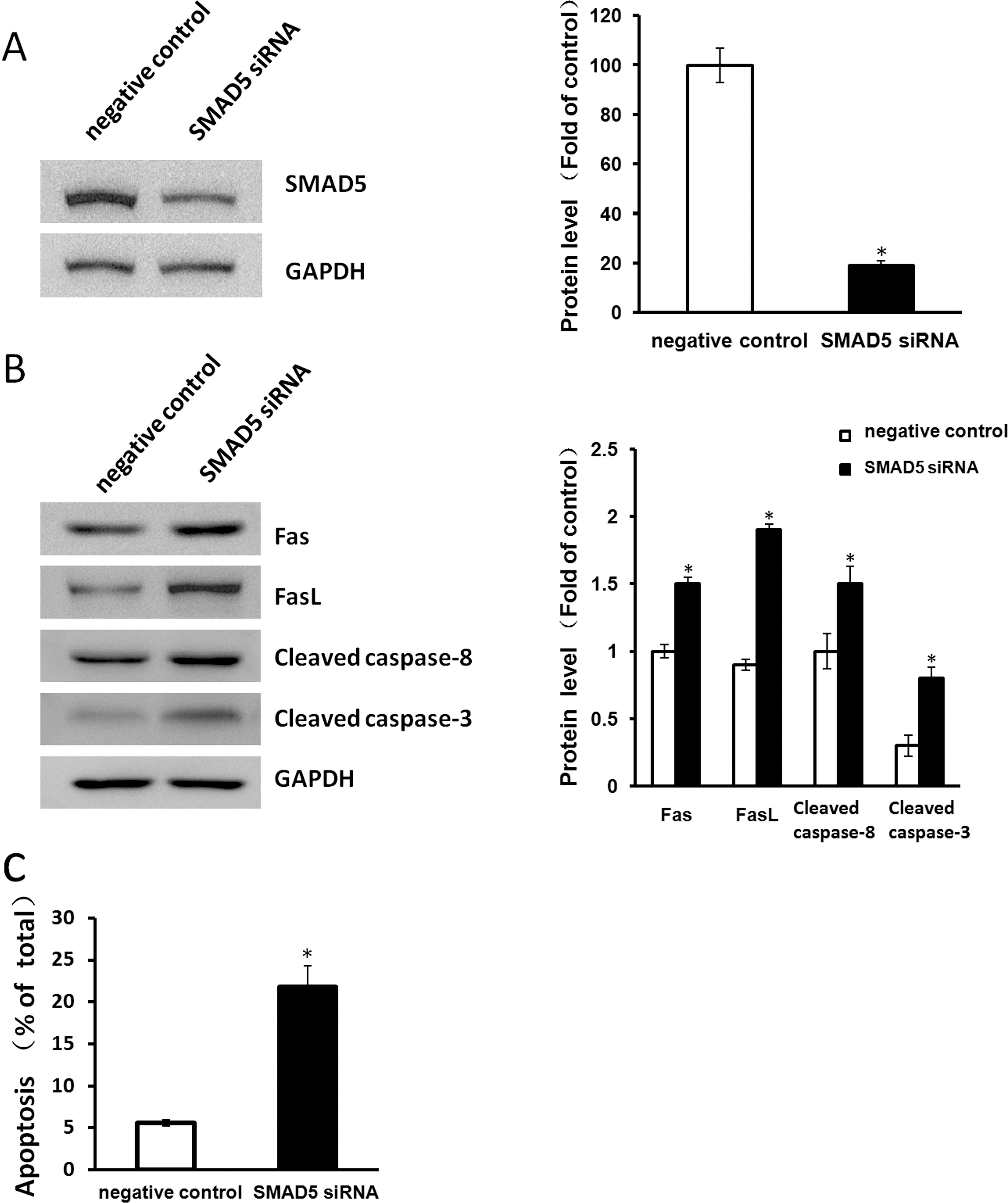 miR-23a and miR-27a Promote Human Granulosa Cell Apoptosis