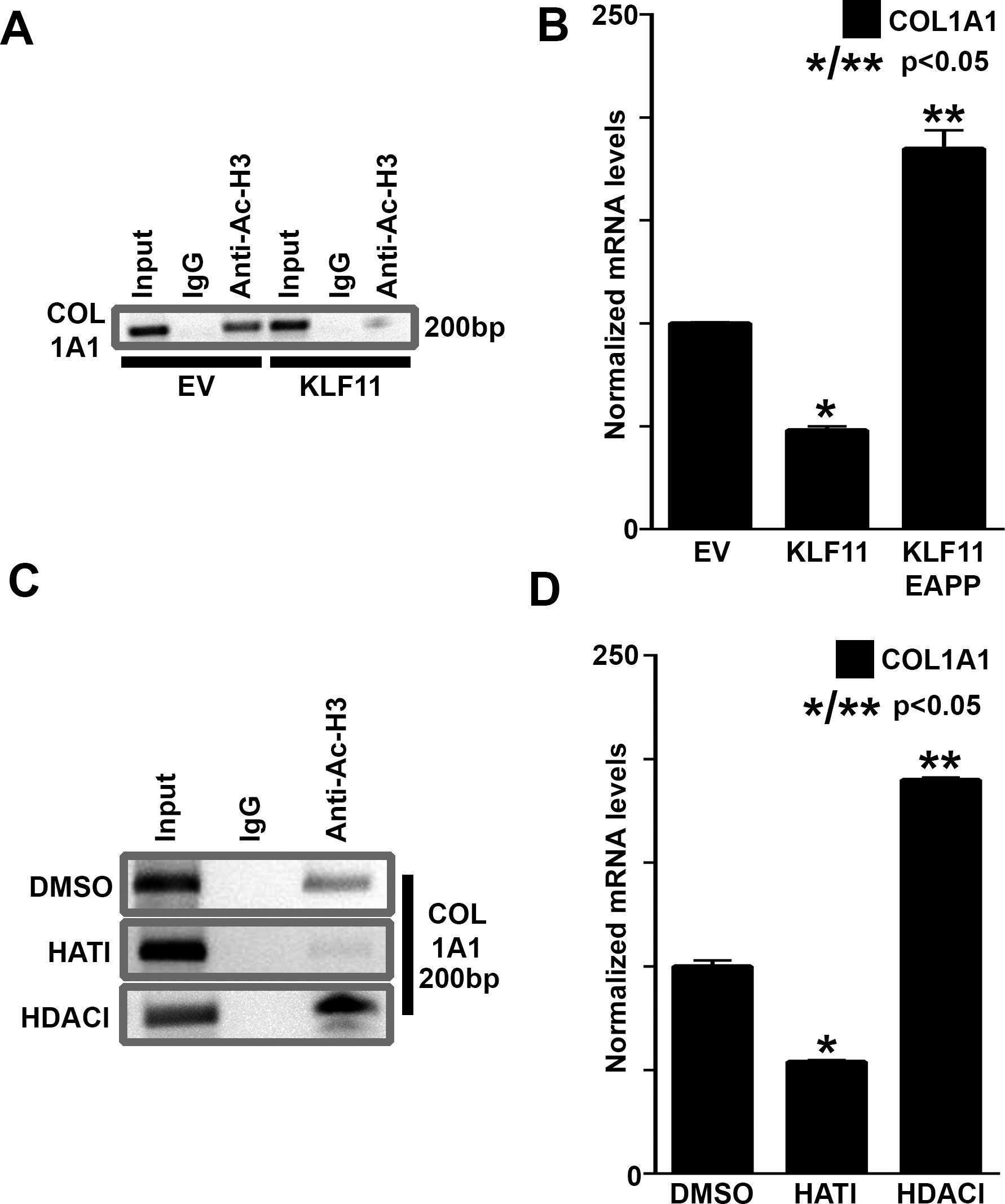 Epigenetic Modulation of Collagen 1A1: Therapeutic Implications in