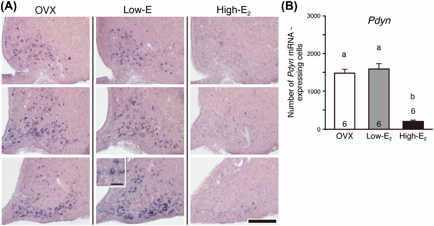 Distinct dynorphin expression patterns with low- and high