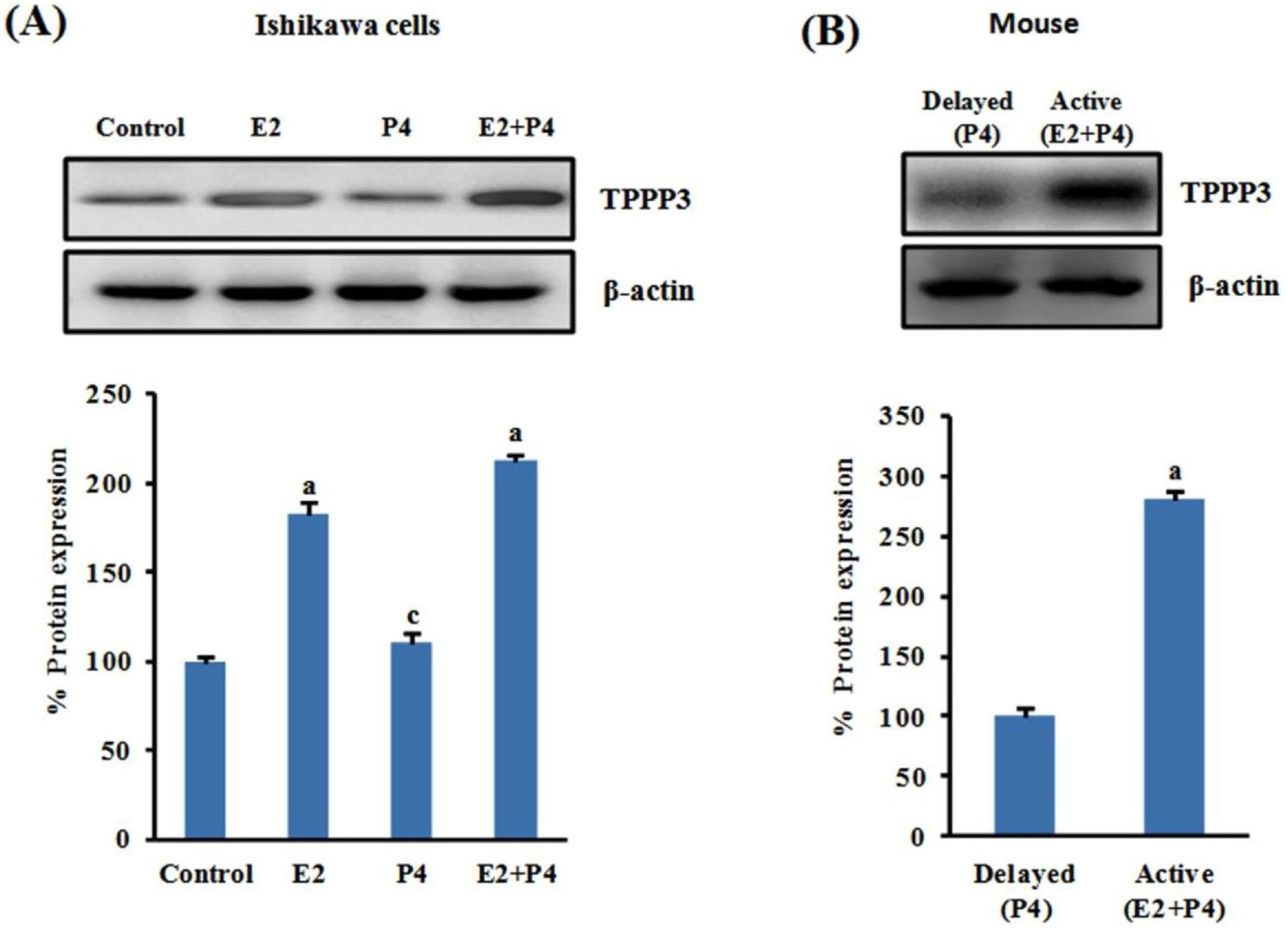 Uterine TPPP3 plays important role in embryo implantation via