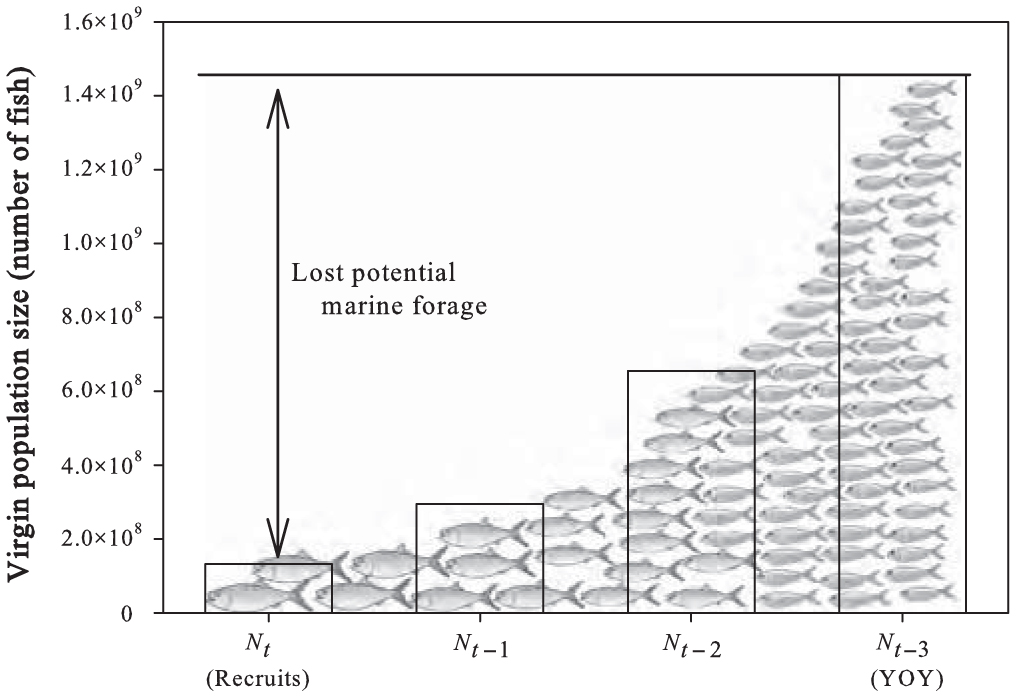 Centuries of Anadromous Forage Fish Loss: Consequences for Ecosystem