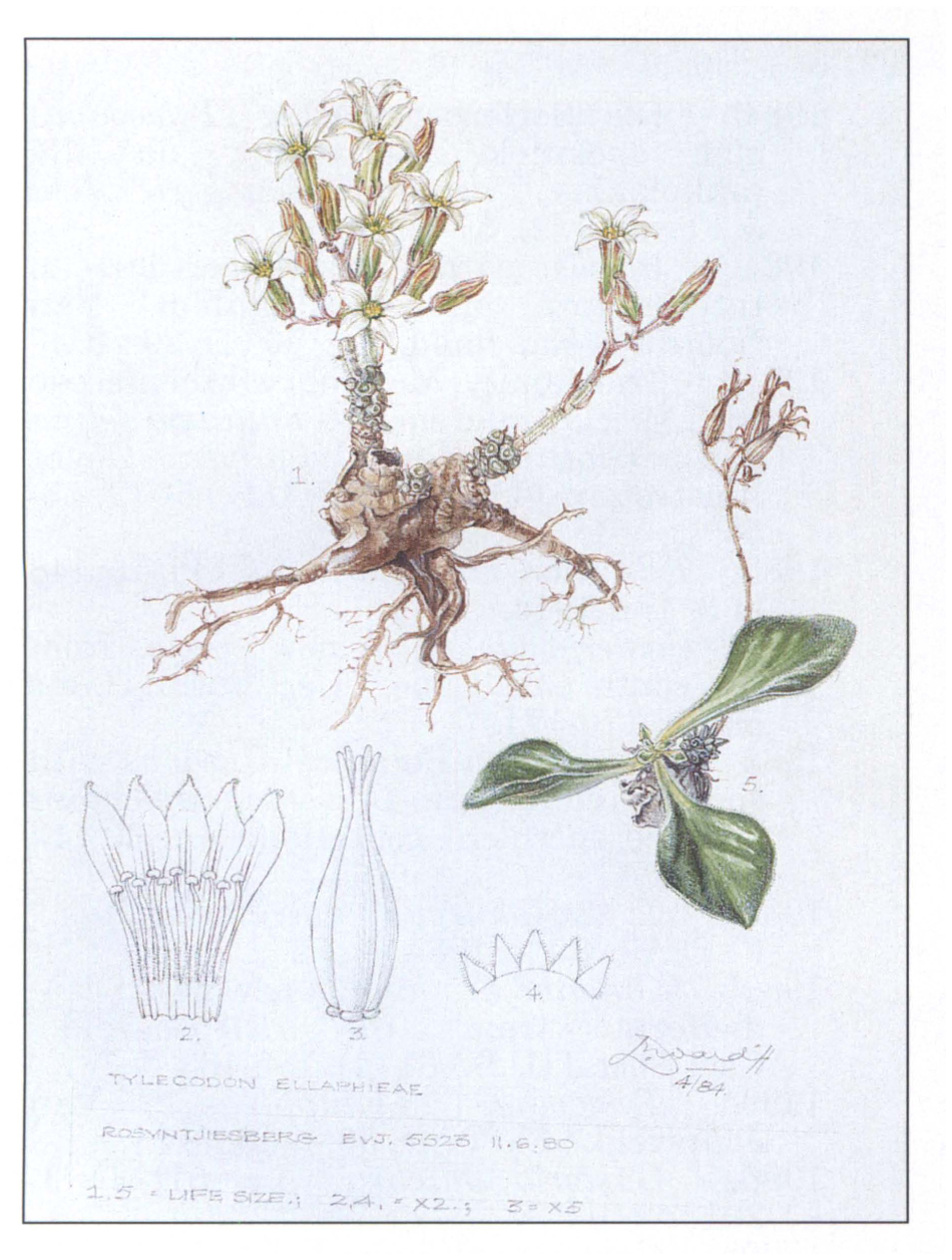 Johanna Ellaphie Ward Hilhorst 1920 1994 With Specific Reference To Her Work On Succulent Plants