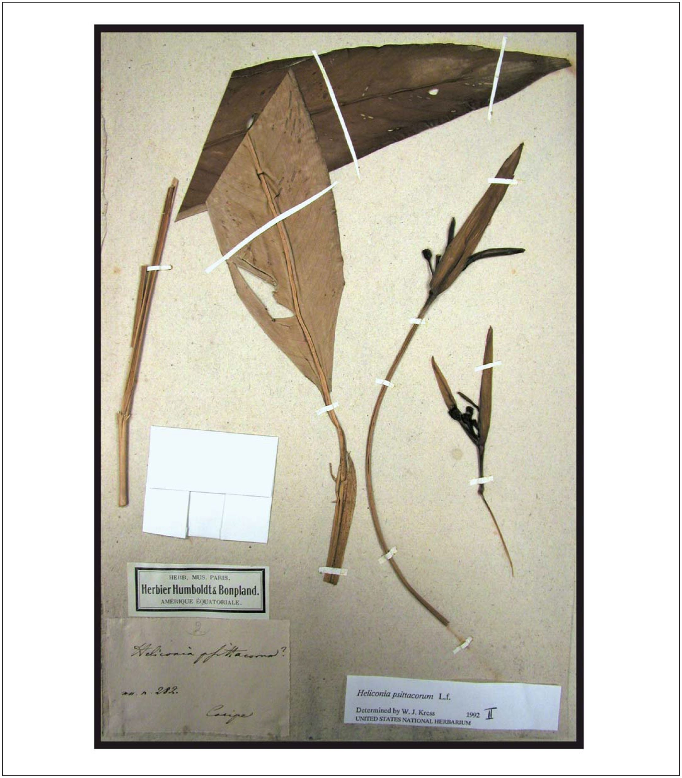 Bonpland and Humboldt Specimens, Field Notes, and Herbaria