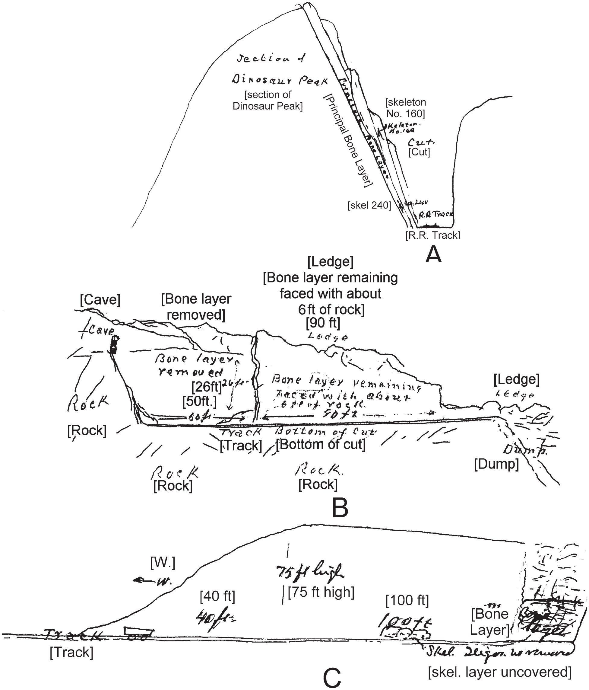 History, Sedimentology, and Taphonomy of the Carnegie Quarry ... on
