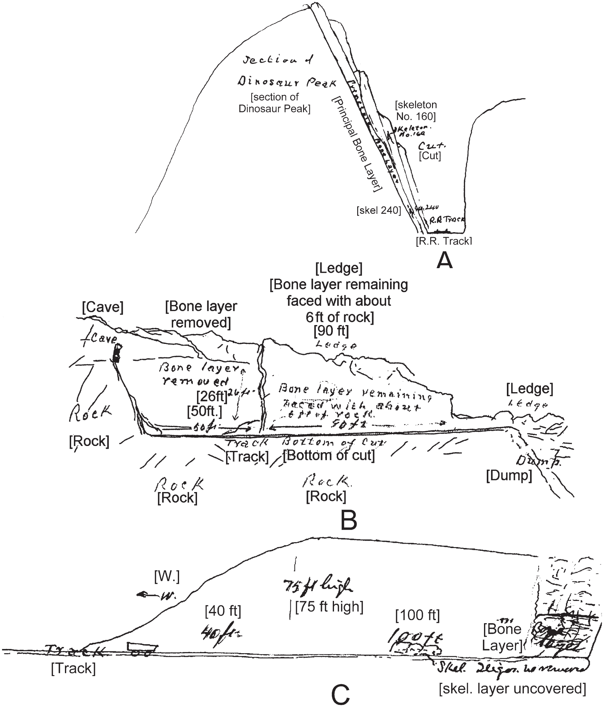 History, Sedimentology, and Taphonomy of the Carnegie Quarry
