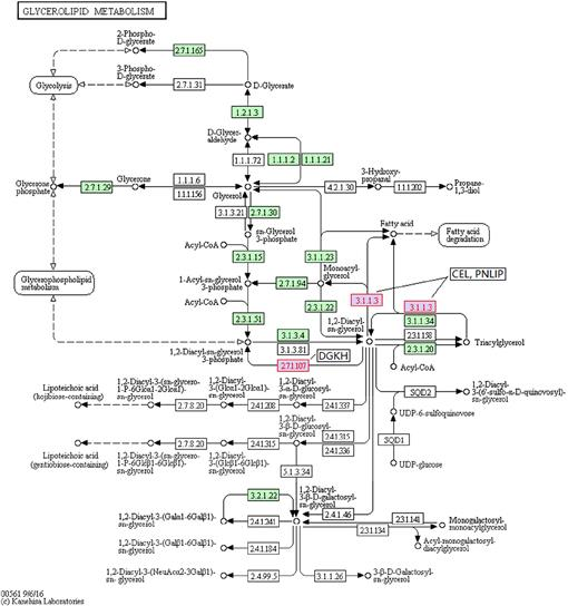 Crucial genes at the onset of lactation revealed by