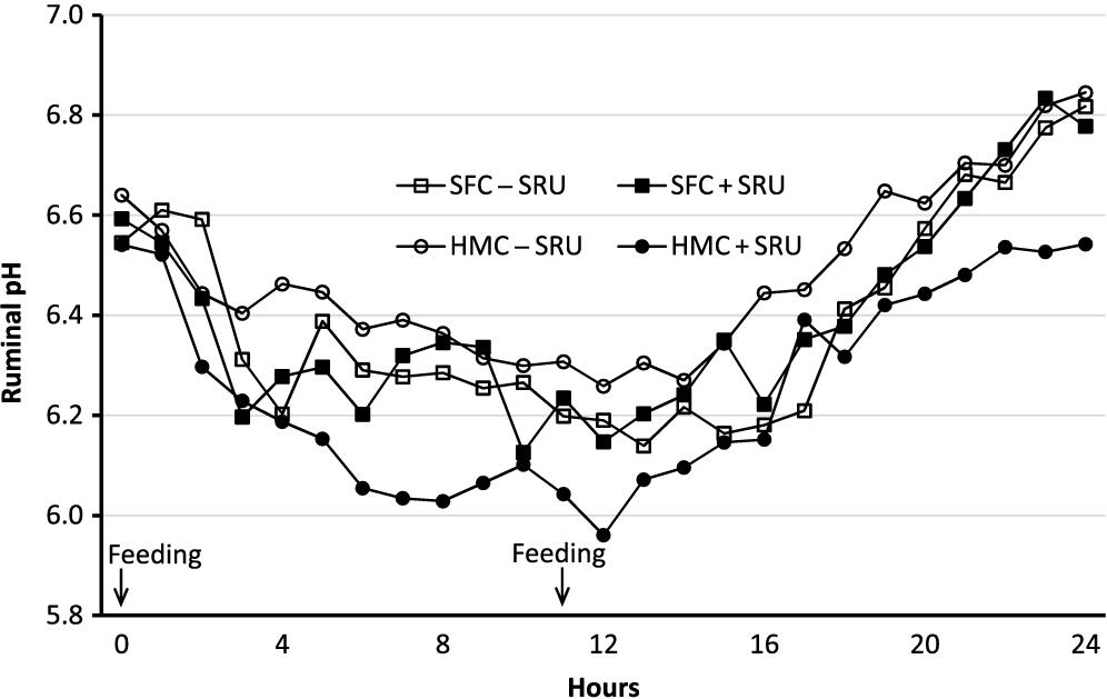 An Investigation Of Feeding High Moisture Corn Grain With Slow