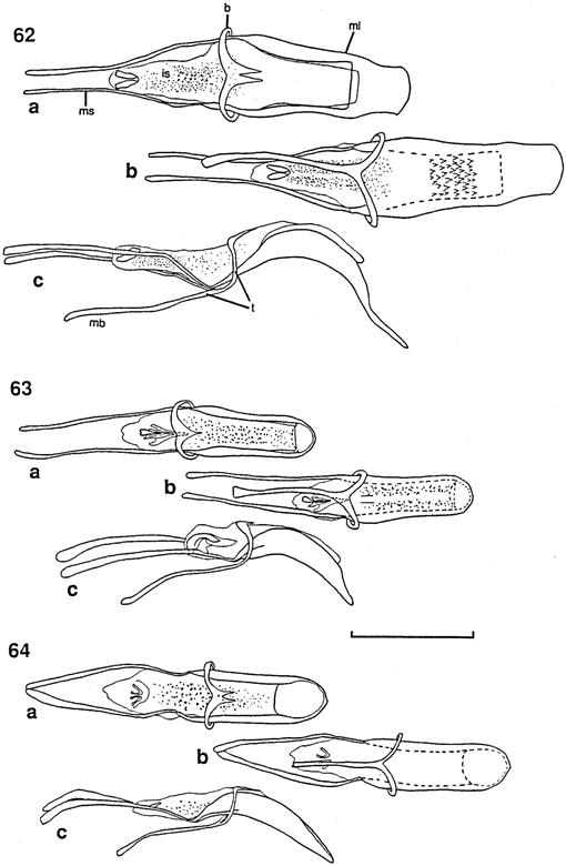 A Taxonomic Revision of Weevils of the Genus Panscopus