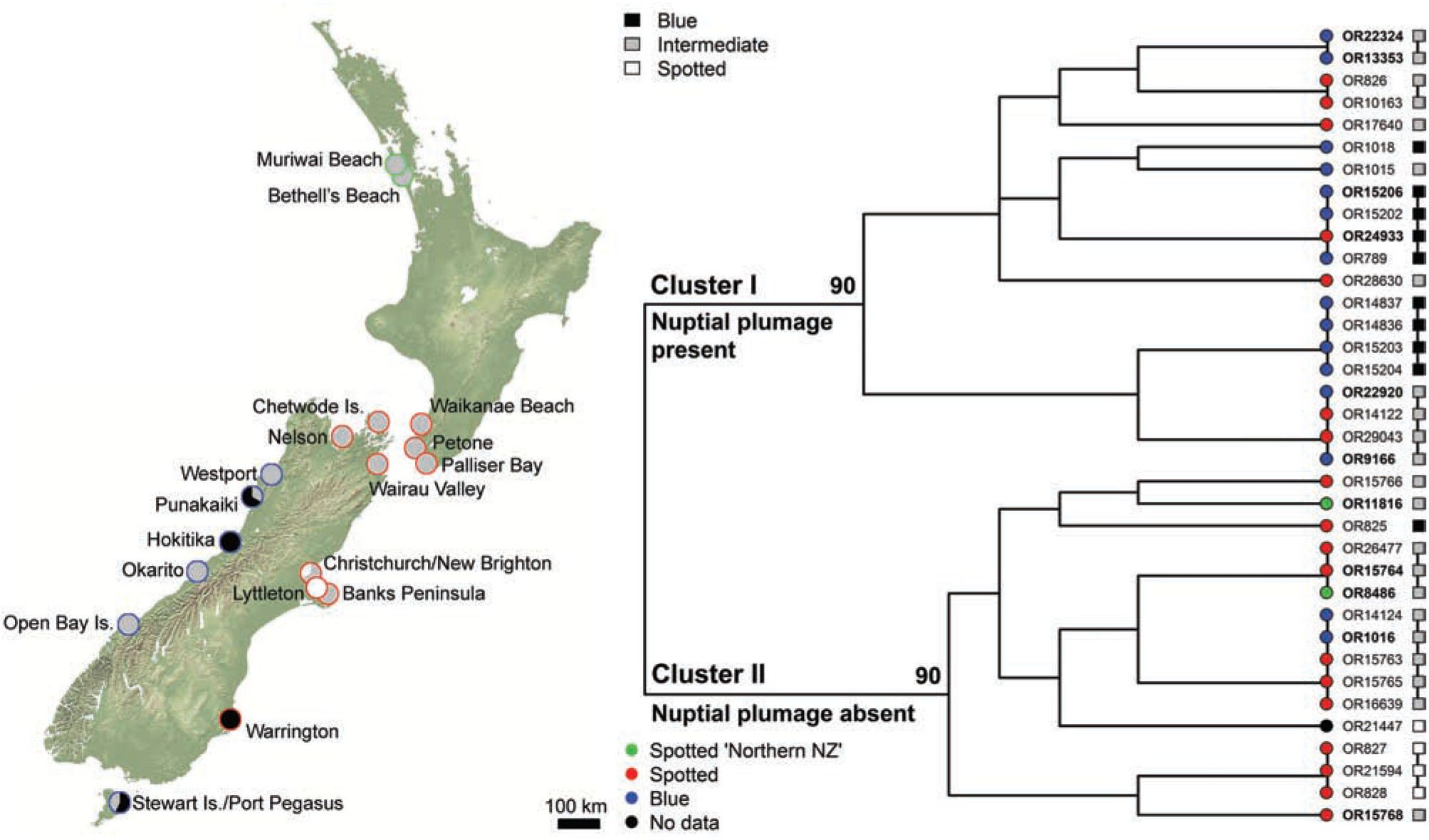 Archival DNA reveals cryptic biodiversity within the Spotted ...