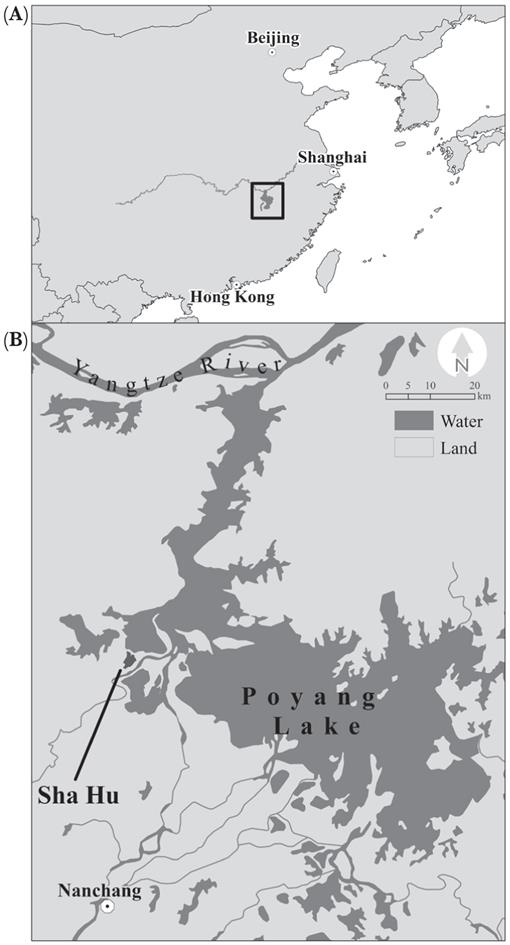 d7272d5cd Foraging Success and Habitat Selection of the Eurasian Spoonbill ...