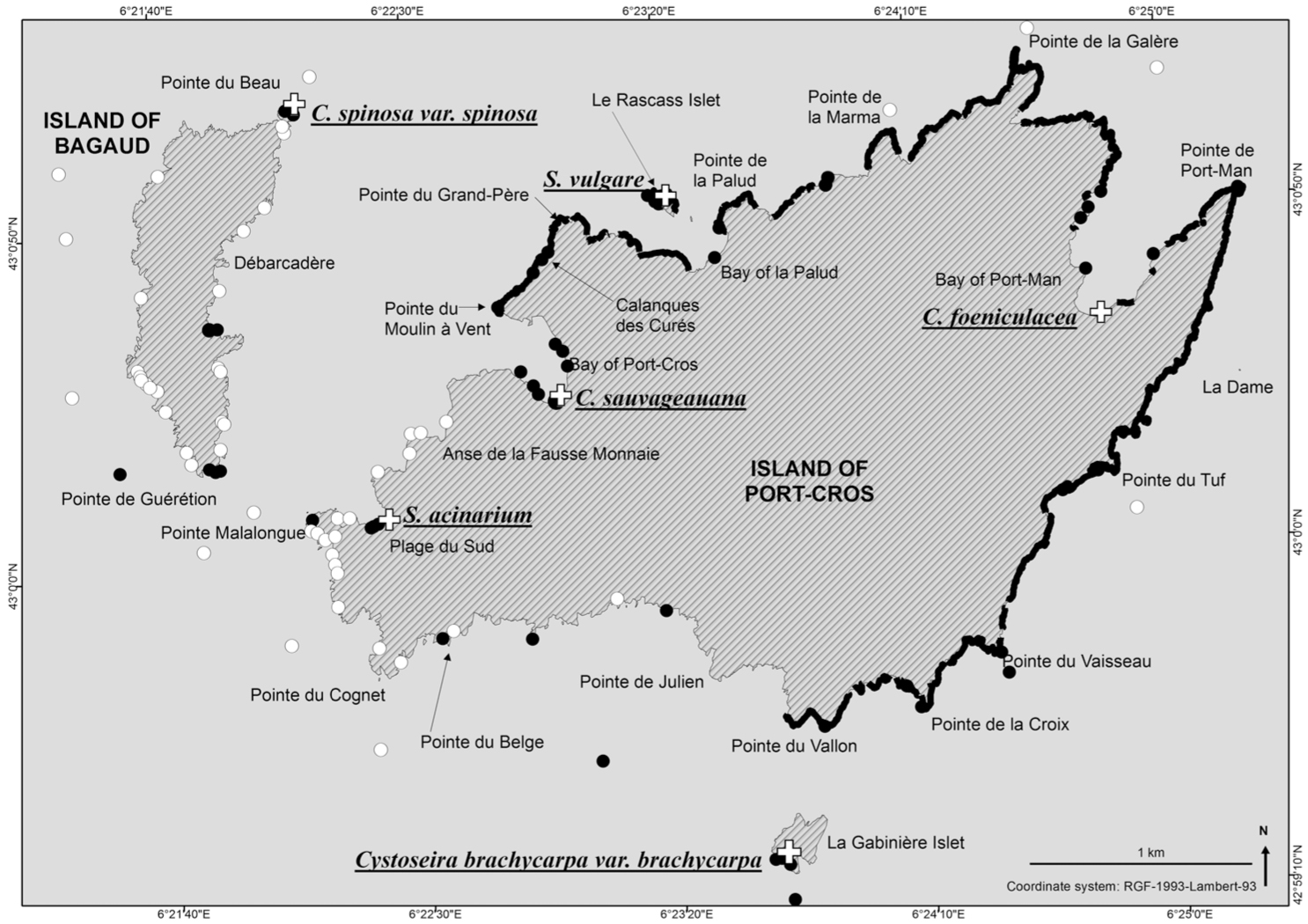 Unexpected Temporal Stability of Cystoseira and Sargassum Forests in