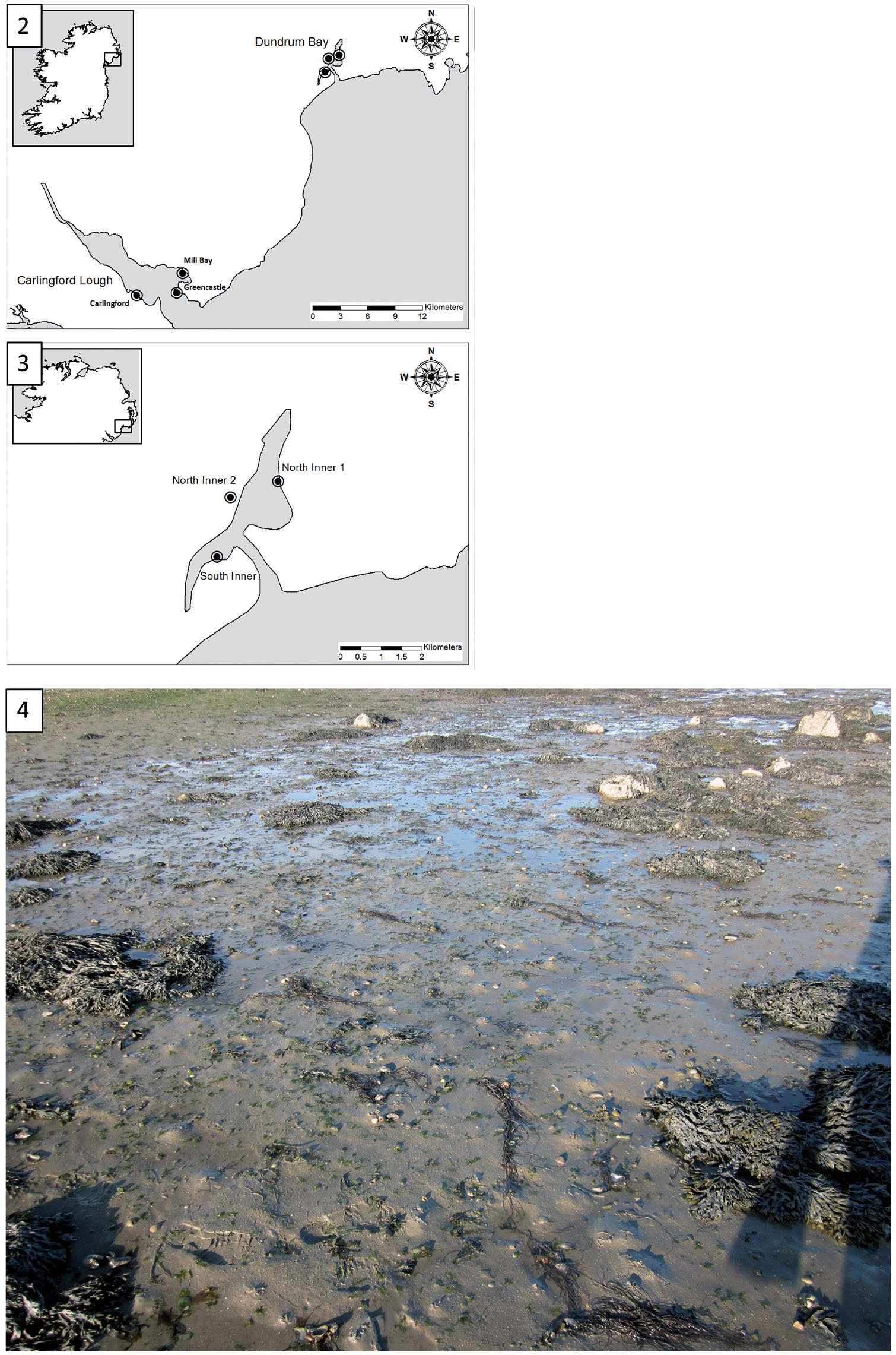 When Invaders Go Unnoticed: The Case of Gracilaria vermiculophylla