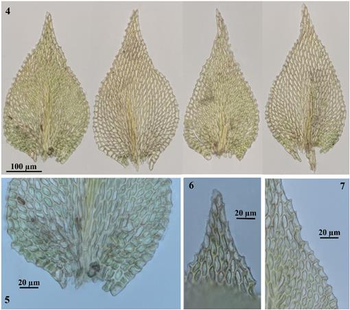 Contribution to the Bryophyte Flora of New Caledonia III