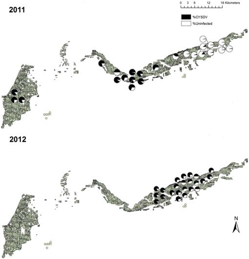 Assessing Transmission of Crop Diseases by Insect Vectors in