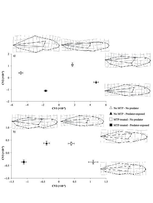 Morphological And Behavioural Responses Of Frog Tadpoles To