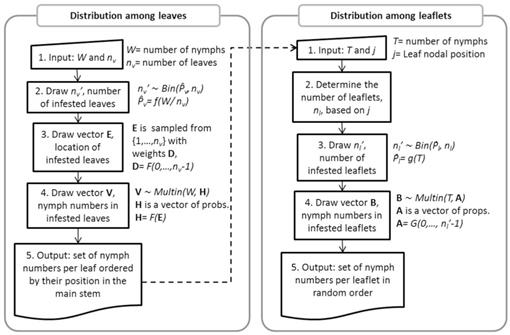 Generating Within-Plant Spatial Distributions of an Insect
