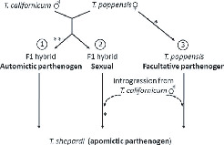 MULTIPLE DIRECT TRANSITIONS FROM SEXUAL REPRODUCTION TO