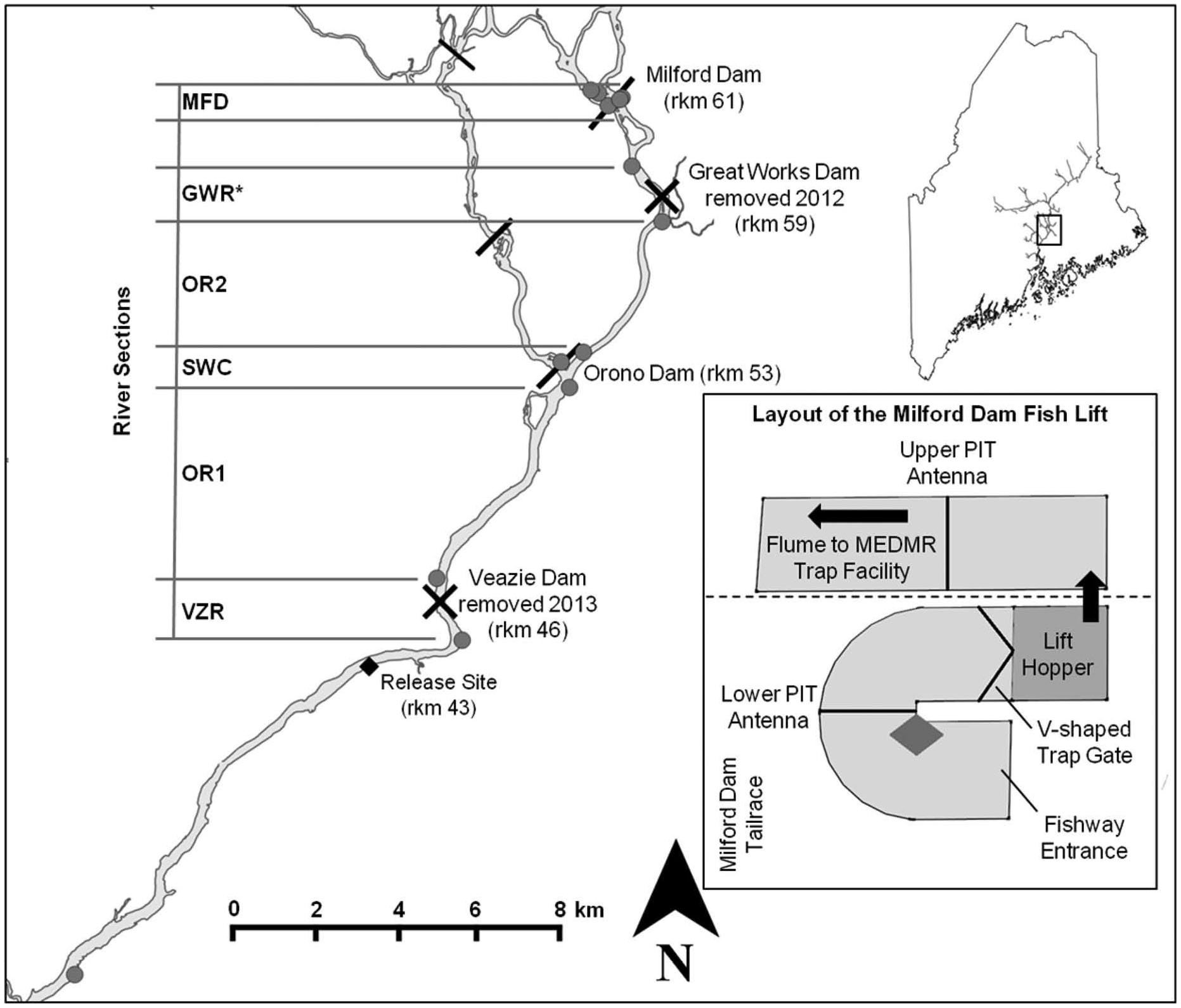 Upstream Movements of Atlantic Salmon in the Lower Penobscot River