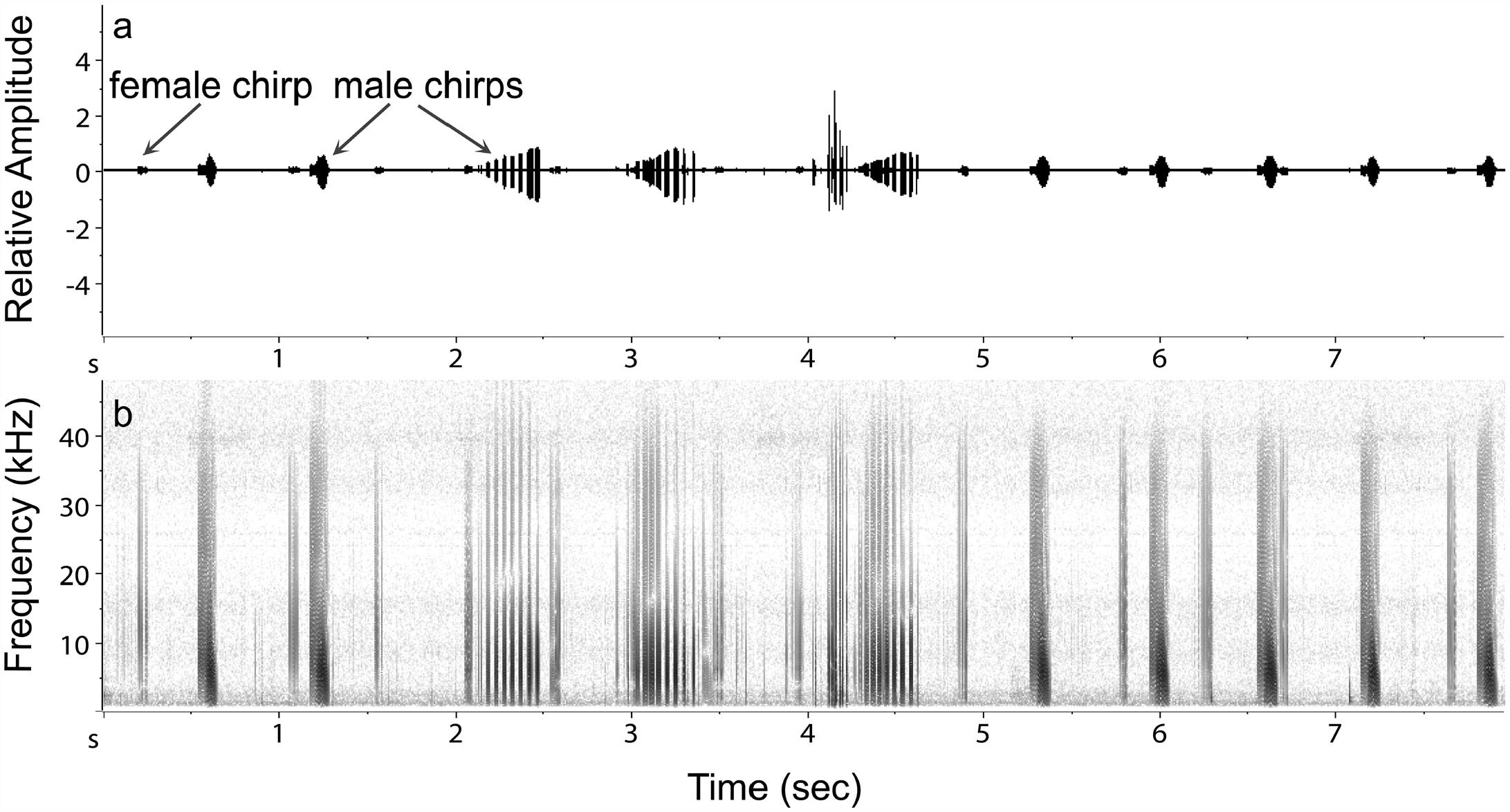 Characterization of Stridulatory Structures and Sounds of the Larger