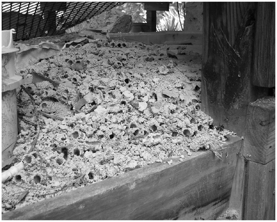The Potential Management of a Ground-Nesting, Solitary Bee