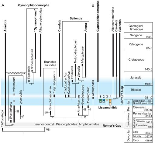 The origin(s) of extant amphibians: a review with emphasis
