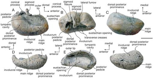 A new marine vertebrate assemblage from the Late Neogene